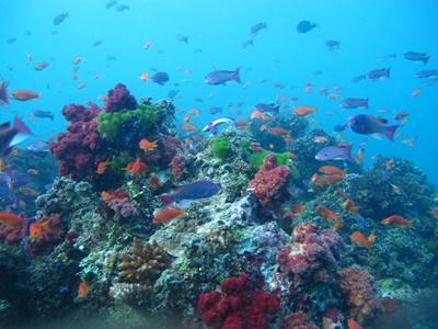 Wochenendtrip, Fidschi-Inseln