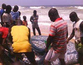 ghana-sozialarbeit-fische