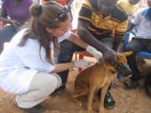 ghana-tiermedizin-impfaktion