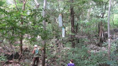 Traps für das Butterflyproject