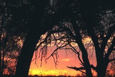 naturschutz-botswana-sonnenuntergang-1