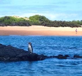 ecuador-unterrichten-pinguin