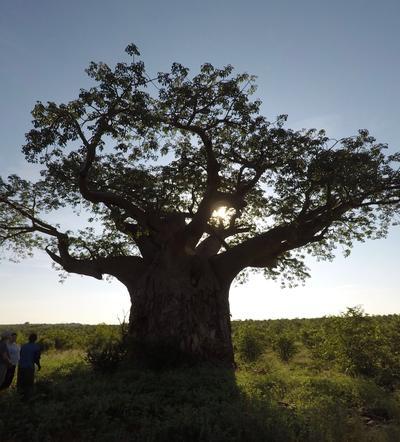 Sonnenuntergang Landschaft in Botswana Südafrika