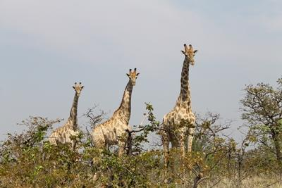 Naturschutz-Projekt Südafrika, Projects Abroad