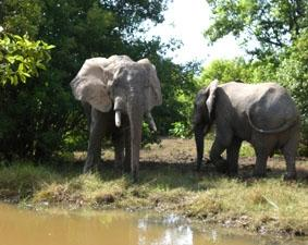 ghana-medizin-nationalpark