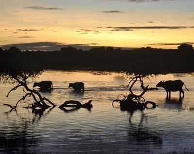 sri-lanka-medizin-safari