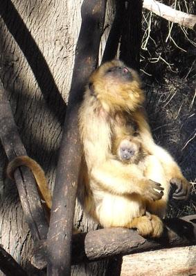 Argentinien Naturschutz Affen