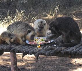 Argentinien Naturschutz Essen