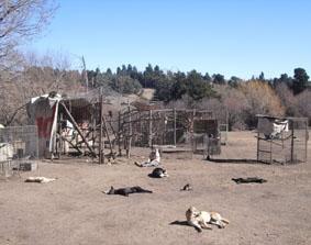 Argentinien Naturschutz Hunde