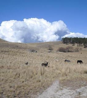 Argentinien Naturschutz Pferde