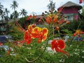 Wunderschone Pflanzen in Thailand