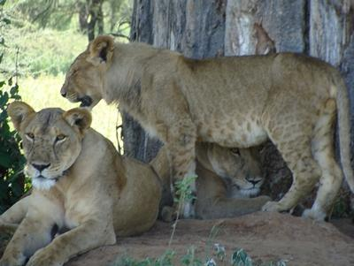 tansania-sozialarbeit-safari