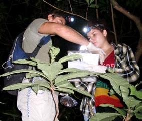 costa-rica-naturschutz-wald