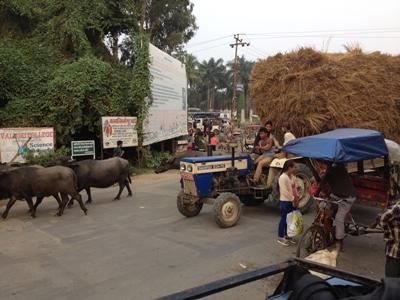 Tiere auf der Straße und Heuwagen waren bei uns keine Seltenheit (Barathpur)