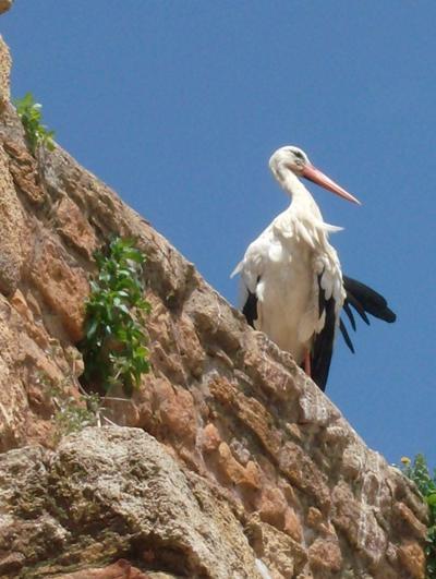 Marokko Unterrichten Storch