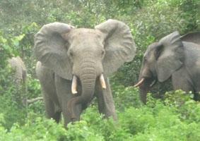 medizin-praktikum-elefanten