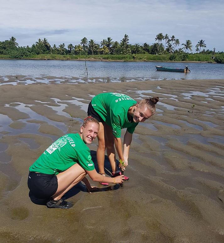 Freiwillige planzen Mangroven