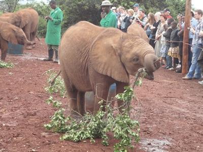 kenia-naturschutz-elefant