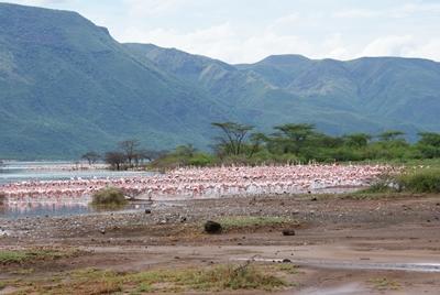 kenia-naturschutz-flamingos