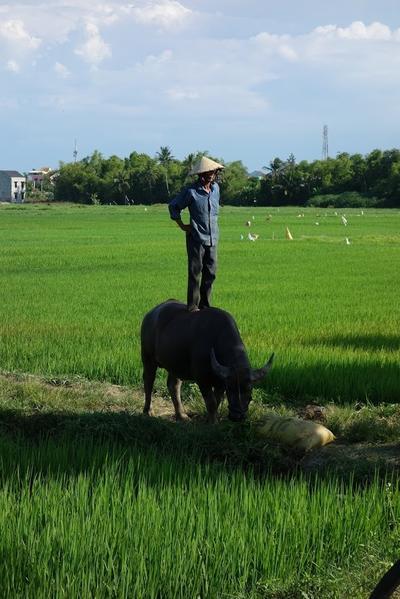 Unterwegs in Vietnam, Projects Abroad