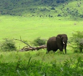 Sozialarbeit Tansania Elefant