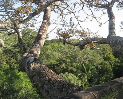 peru-naturschutz-dschungel