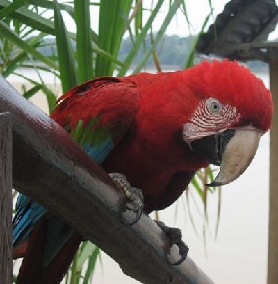 peru-naturschutz-papagei