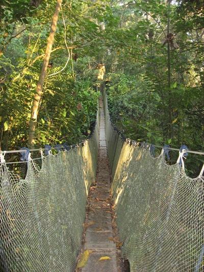 peru-naturschutz-regenwald