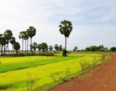kambodscha-khmer-reisfelder