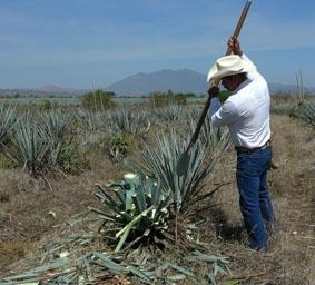 mexiko-sozialarbeit-tequila