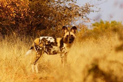 Südafrika-Naturschutz