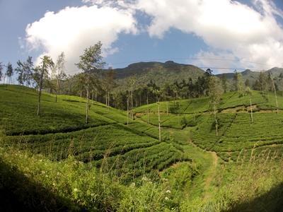 Medizin - Praktikum in Sri Lanka Berge