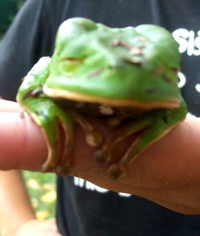 peru-naturschutz-frosch