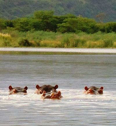 athiopien-sport-nilpferde