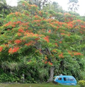 fidschi-sozialarbeit-natur