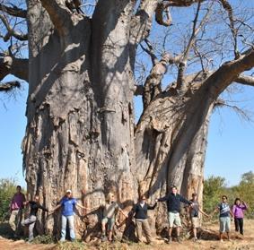 naturschutz-südafrika-baum