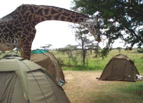 tansania-sozialarbeit-serengeti