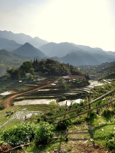 vietnam-wirtschaftspraktikum-reisterrassen