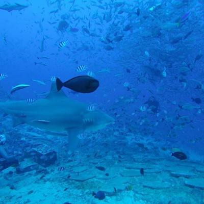 Die Unterwasserwelt auf Fidschi