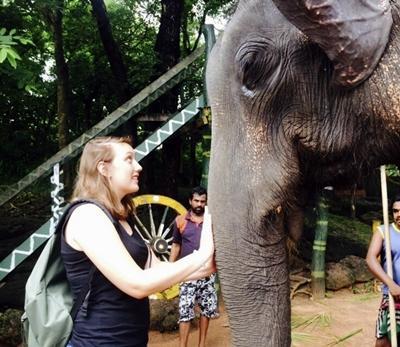 Elefanten in Dambulla, Sri Lanka
