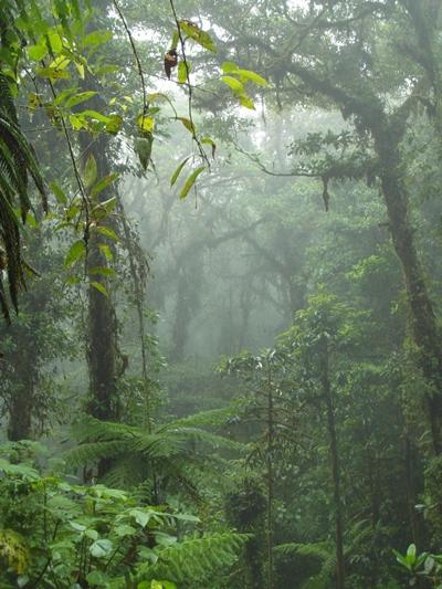costa-rica-sozialarbeit-regenwald