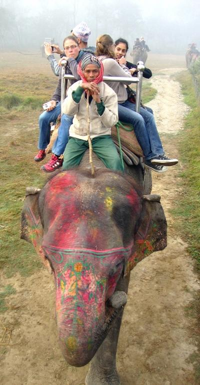 nepal-sozialarbeit-elefant