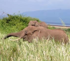 Tansania, Sozialarbeit Elefant