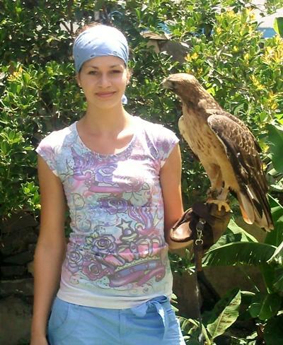 Mexiko-Naturschutz-Falke