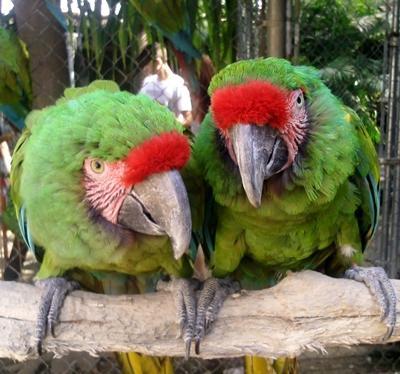 Mexiko-Naturschutz-Tierpflege
