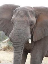 Auch Elefanten gab's zu sehen