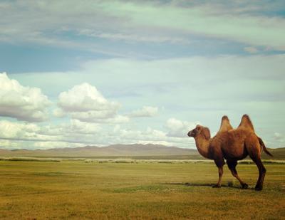 Kamele Nomaden-Projekt Mongolei, Projects Abroad