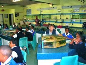 Südafrika Unterrichten Aquarium