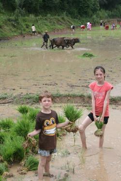 Villum og Zoë planter ris i det nepalesiske mudder!