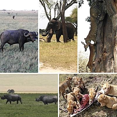 Lises billeder fra safari i Arusha